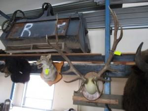 5 x 6 Colorado Elk Mount