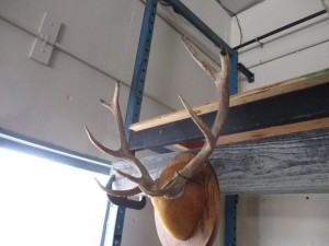 5 x 4 Red Stag Mount